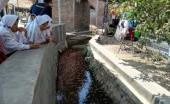 Seperti di Jepang, Selokan Desa di Cirebon Ini Disulap Menjadi Kolam Ikan