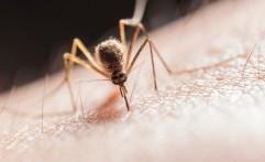 Mengenal Skeeter Syndrome, Penyakit Alergi Nyamuk