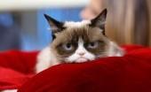 Mengenang Grumpy Cat, Kucing Pemarah Sensasi Internet