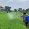 Kunjungi Kawasan Pertanian Karanganyar, Mentan Gaungkan Gerakan Padat Karya