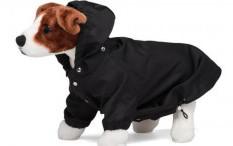 Para Sosialita, Yuk Beli Jas Hujan Untuk Anjing Peliharaanmu Seharga 7 Jutaan