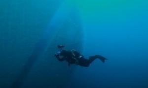 Spot Diving Terbaik Dunia ini Tawarkan Pengalaman Tak Terlupakan untuk Penyelam
