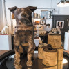 'Museum of the Dog', Koleksi Seni Rupa K-9 Terbesar di Dunia
