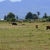 Pemkab Gunung Kidul Gelontorkan Rp 15,3 Miliar Dana Anti-Kekeringan