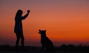 'Social Distancing' Juga Diterapkan Pada Hewan Peliharaan