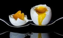 Telur Ayam Sehat tanpa AGP