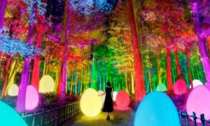 Instalasi Seni Cahaya Warna-Warni di Taman Kairakuen Jepang