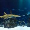 Cara Pelihara Ikan Hias Air Laut Tapi Tinggal di Puncak Bogor