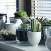 4 Tanaman Hias Pembersih Udara dalam Rumah