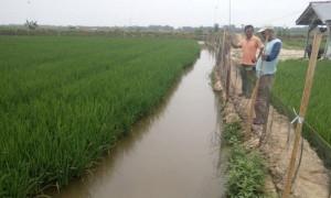 Sektor Pertanian Heronya Perekonomian saat Krisis akibat Pandemi