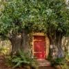 Rumah Pohon 'Winnie the Pooh' Ada di Dunia Nyata