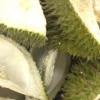 Perban Antibakteri dari Kulit Durian