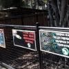 Taman Satwa Cikembulan: Ayam dan Merpati Sudah Habis Dikasihkan ke Harimau