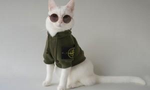 Inilah 5 Kucing Peliharaan yang Memiliki Harga Fantastis