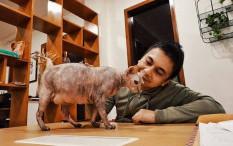Raditya Dika Ungkap Alasan Jadikan Kucing Sebagai 'Teman Hidup'