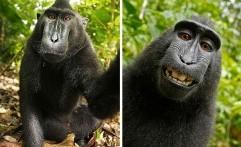 Foto Selfie Hewan-Hewan ini Dijamin Lucu