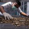 Di Tengah Pandemi COVID-19, Ekspor Makanan Olahan Indonesia Naik 7,9 Persen