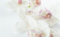 Tanaman Hias Berbunga Putih Percantik Rumah saat Lebaran