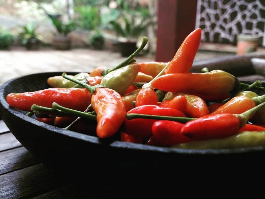 10 Manfaat Mengonsumsi Cabai bagi Kesehatan