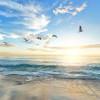UNDP dan UNEP Ajak Masyarakat Jaga Ekosistem Laut