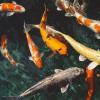 Ikan Koi, Perlu Ruang Khusus