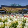 Menikmati Tulip Tahunan Paling Berwarna-warni di Belanda Dari Rumah