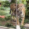 Syarat Anak-anak Masuk Kebun Binatang Gembira Loka