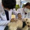 Pentingnya Vaksinasi Rabies untuk Anjing Kesayanganmu
