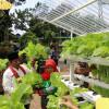 Teknologi Berkembang, Milenial Bisa Lirik Bisnis Pertanian