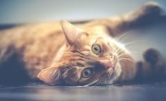 Ternyata Kucing Kenal dengan Nama Mereka, Tapi Suka Cuek
