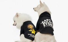BAPE Baby Milo Pet Collection Bikin Tampilan Anjing Kesayanganmu Hypebeast