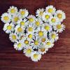 'White Day', Hari Valentine Kedua Bagi Orang Jepang