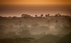 19 Hektare Hutan Taman Nasional Baluran Dibakar Orang Tak Bertanggung Jawab