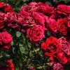 Karangan Bunga Mencemari Lingkungan, Solusinya?