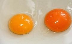 Amankah Konsumsi Telur Mentah? Ini Penjelasannya