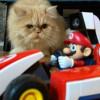 Kucing Peliharaan Jadi Musuh Gim Mario Kart Live: Home Circuit