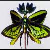 'Menghidupkan Kembali' Serangga Mati lewat Seni