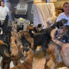 Lindungi Ratusan Anjing Liar dari Badai, Aktivis Hewan Ini Jadi Sorotan Dunia