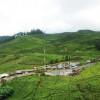 Tingkat Kunjungan Rendah, 555 hotel dan Penginapan di Kabupaten Bogor Masih Bertahan