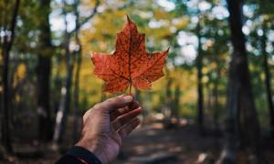 September Perbatasan Kanada Dibuka untuk Pelancong Internasional