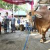 Pandemi COVID-19, Penjualan Hewan Kurban di Bandung Menurun