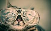Sesuaikan Kacamata dengan Bentuk Wajah