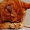 Apa Yang Dikatakan Kucing Tentang Karakter Pemiliknya?