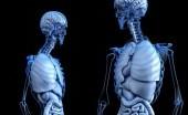 Hati-Hati, Bagian Vital Pada Tubuh Ini Bisa Jadi Penyebab Kematian