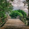 Indonesia Bakal Bikin Regulasi Perdagangan Karbon Mangrove
