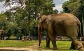 Kebun Binatang Ragunan, Tempatnya Mengenal Satwa di Ibu Kota