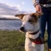 Biar Dia Enggak Bosan, Ajak Anjing Peliharaan Lakukan 6 Aktivitas Seru Ini