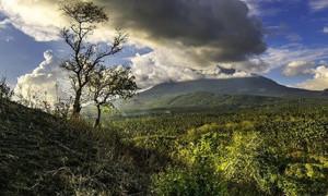 Menengok Tarsius dan Yaki di Cagar Alam Tangkoko