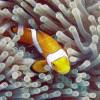 LIPI dan Kemenko Marves Bangun Kebun Raya Maritim di Bali