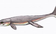 Buaya Purba Jurassic Tiru Paus untuk Mendominasi Laut